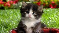baby-kittens-baby-animals-19797206-1600-900