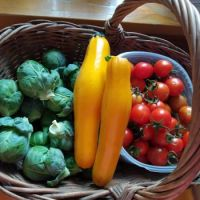 Cosecha  Harvest