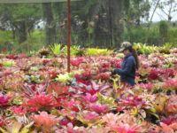 Bromeliad Farm
