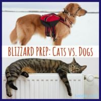 BlizzardPrep: Cats vs. Dogs