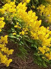 special yellow blooms