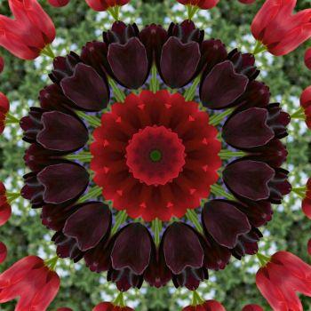 kaleidoscope 314 black tulips small