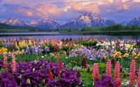 Grand Tetons Spring Flowers