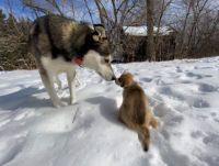 Puppy Meets Grandma!