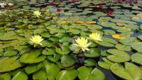 Botanical garden in Kosice, Slovakia 2