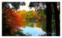 NYC Central Park Pond