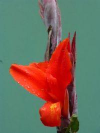 Petals in Peru