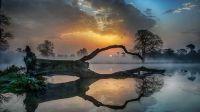 Misty lake with fallen tree