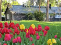 View with tulips
