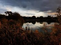 Nyewood Ponds, Rogate, Sussex 4