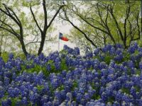 Texas in the Spring