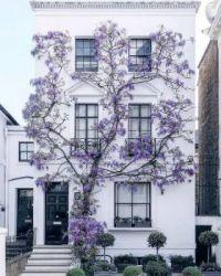Květinový dům Londýn