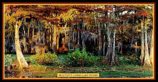 Beautiful Caddo Lake Swamp