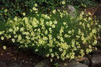 Yellow flowers2