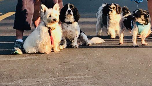 Black & white dog brigade