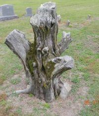 Cedar Stump.