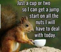 Nuts :-)