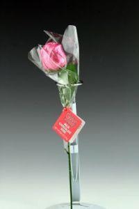 Hot Stuff chocolate rose, pink variant