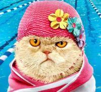 Cat in a Hat