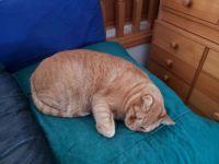 Papaya on Hairy Cushion2019