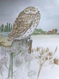 Owl aquarel, April 2020