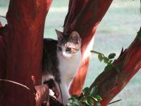 kitten in the myrtle