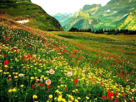 Hillside flowers