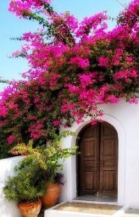 Beautiful flowers and wooden door...