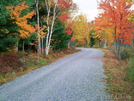 Acadia Natl Park by Bob Atkins