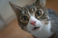 pexels-photo-225406.jpeg kitten