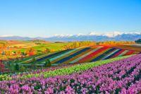 Hues of Hokkaido
