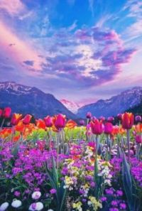 Mountains and Flowers...