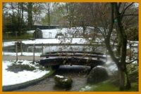 Japanese garden in Hasselt, snow on the blossoms.