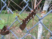 Interesting caterpillar