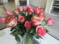 My new Roses