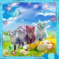 color kittys