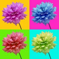 062 - Flowers of Multi-Colors
