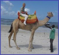 Jízda na velbloudu...  Riding a camel ...