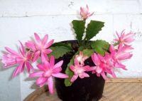 Epi pink cutting  5 in flow.