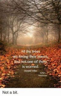 ALL THE TREES ARE LOSING THEIR LEAVES AND NOT ONE OF THEM IS WORRIED  Donald Miller