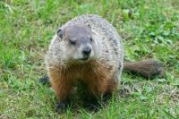 Groundhog for Brighty!