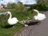 Family picnic at Moors Valley Country Park Dorset UK