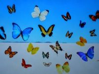Butterflies are free . . . . .