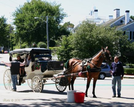 Horse and Buggy, Plymouth, MA