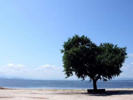 Sea by the tree