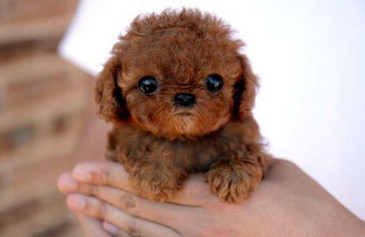 cuteness number 2