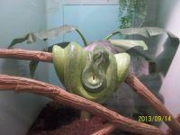 Green Snake at the Zoo