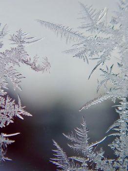 Fern Frost