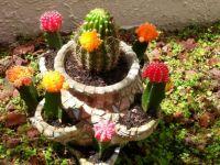 20200530 A few backyard cacti