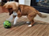 Chase & His Giggle Ball